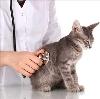 Ветеринарные клиники в Короче